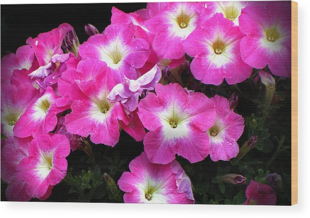 Petunias Wood Print featuring the photograph Pink Petunias by Ms Judi