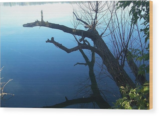 Lake View Wood Print featuring the photograph Seeing Double by Linda Gonzalez