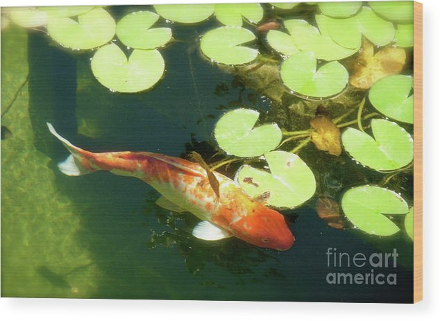Koi Wood Print featuring the photograph Wisdom by Amy Strong
