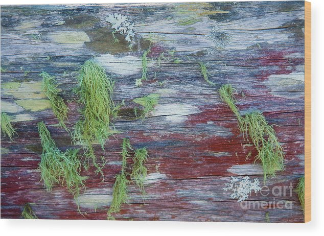 Moss Wood Print featuring the photograph Moss On Old Fence by Sheila Smart Fine Art Photography