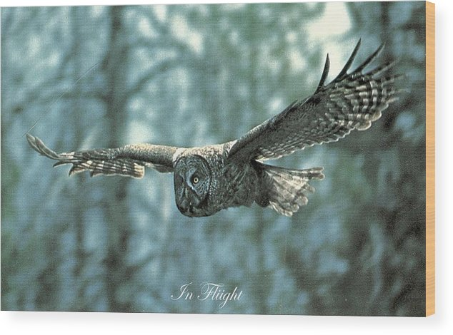Wildlfe Wood Print featuring the photograph In Flight by David Hicks
