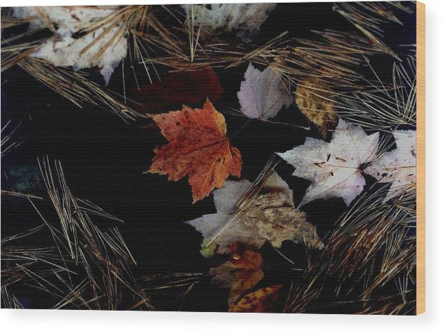Fall Wood Print featuring the photograph Fallen Leaves by Alfredo Martinez