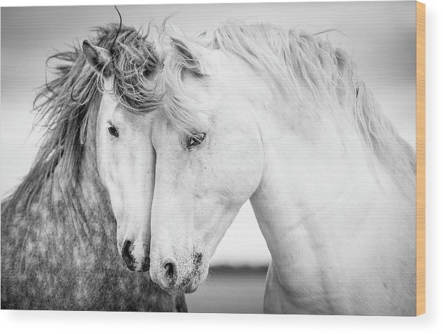 Horse Wood Print featuring the photograph Friends V by Tim Booth