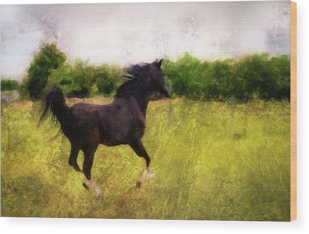 Horse Wood Print featuring the digital art Horse Study #7 by Everlasting Equine Horse Art