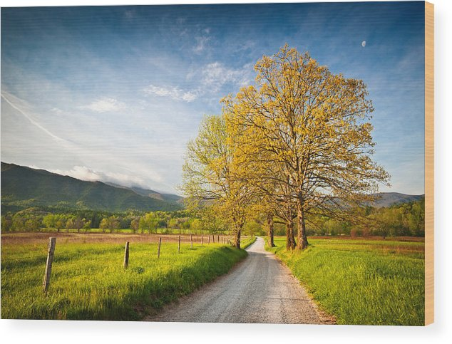 Spring Wood Print featuring the photograph Hyatt Lane Cade's Cove Great Smoky Mountains National Park by Dave Allen