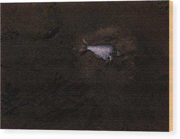 Jalama Wood Print featuring the photograph Jalama Fish by Alfredo Martinez