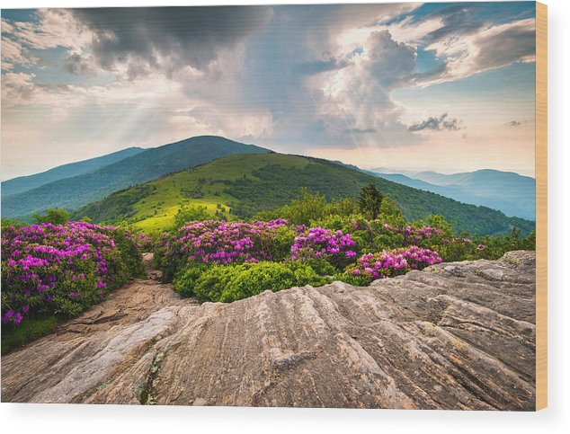 Roan Mountain Wood Print featuring the photograph North Carolina Blue Ridge Mountains Landscape Jane Bald Appalachian Trail by Dave Allen