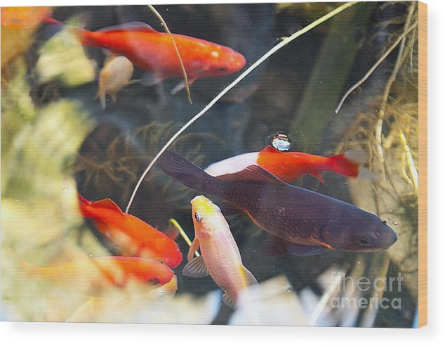 Koi Wood Print featuring the photograph Koi Pond The Symbol Of Love And Friendship by Artist and Photographer Laura Wrede
