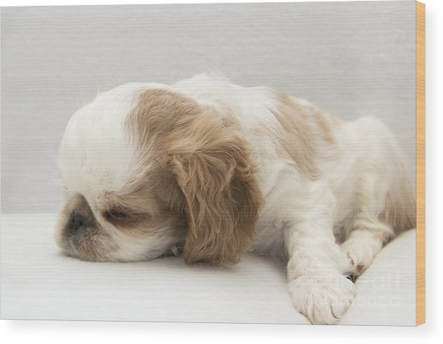 Puppy Wood Print featuring the photograph Sleepy Head by Jeannette Hunt