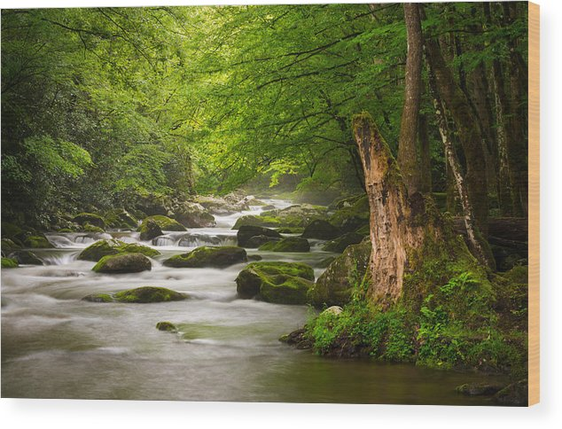 Great Smoky Mountains Wood Print featuring the photograph Smoky Mountains Solitude - Great Smoky Mountains National Park by Dave Allen