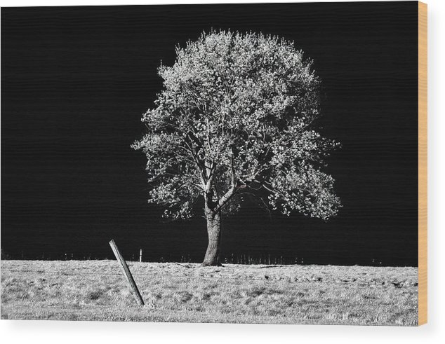 Tree Wood Print featuring the photograph Crooked Post by Stephen Pacello