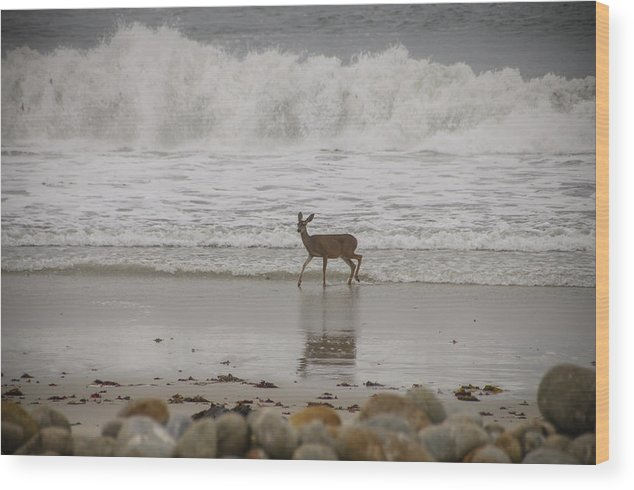 2012 Wood Print featuring the photograph Deer In Ocean Surf by Connie Cooper-Edwards
