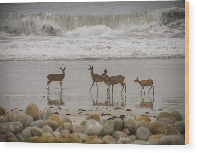 2012 Wood Print featuring the photograph Deer On Beach by Connie Cooper-Edwards