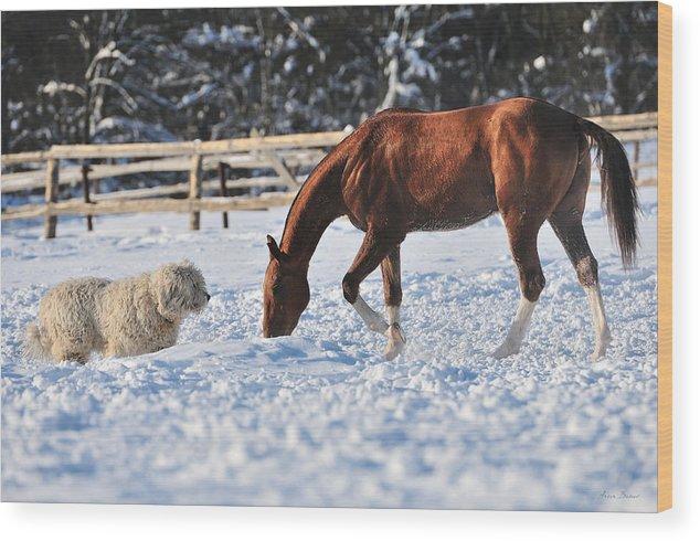 Dog Wood Print featuring the photograph Altynylduz by Artur Baboev