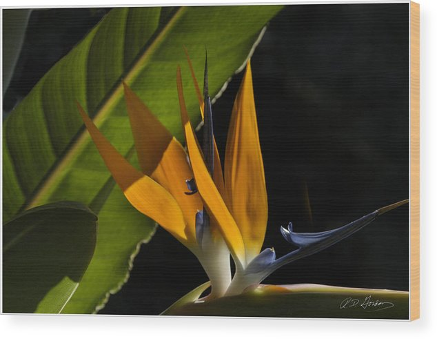 Flower Wood Print featuring the photograph Bird Of Paridise2 by Richard Gordon