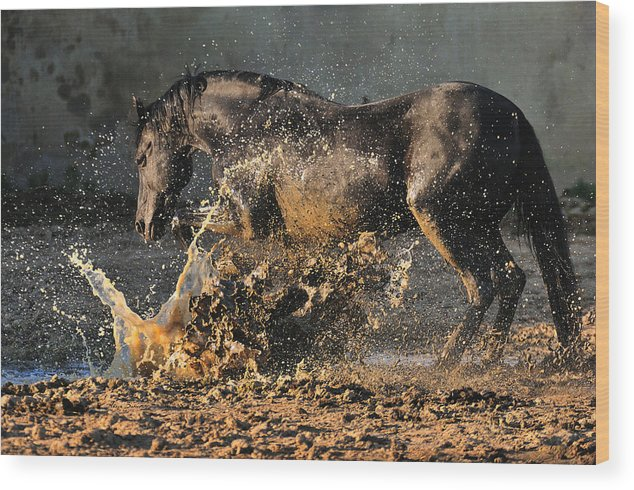 Horses Wood Print featuring the photograph Boom by Artur Baboev