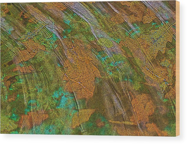 Dog Pool Wood Print featuring the photograph Cocoa's Pool by Sherri Meyer