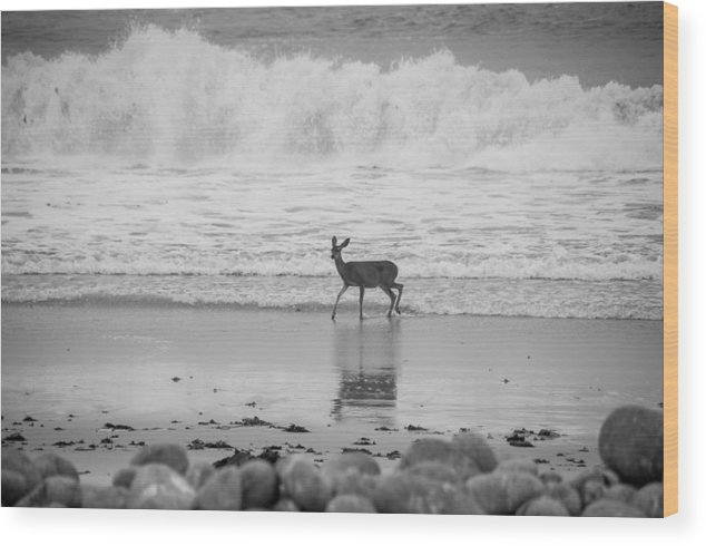 2012 Wood Print featuring the photograph Deer In Ocean Black And White by Connie Cooper-Edwards