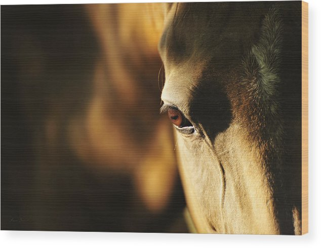 Horses Wood Print featuring the photograph Eye by Artur Baboev