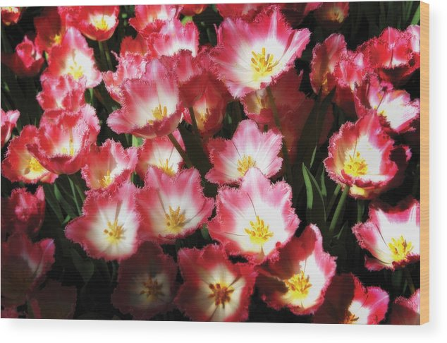 Flowers Wood Print featuring the photograph Flowers by Craig Incardone