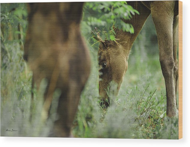 Horses Wood Print featuring the photograph Foals by Artur Baboev