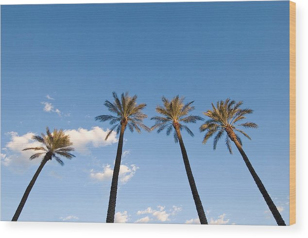 Palm Trees Wood Print featuring the photograph Four Palm Trees by Rich Iwasaki