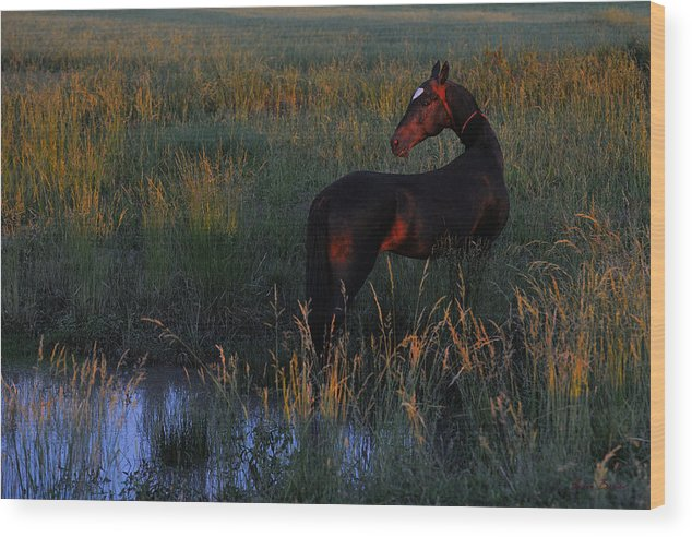 Horses Wood Print featuring the photograph Gasyr #2 by Artur Baboev