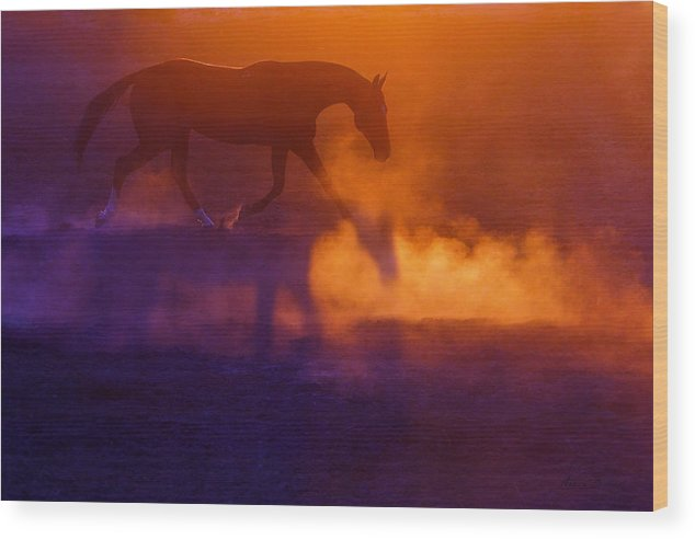 Horses Wood Print featuring the photograph Gireykhan by Artur Baboev