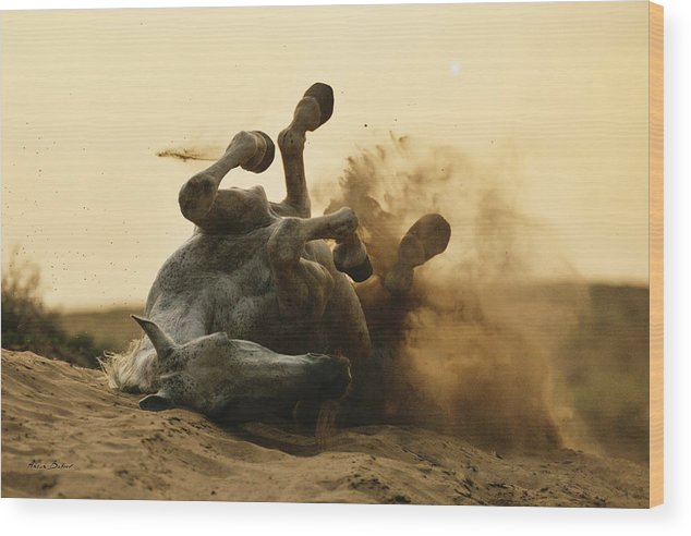 Horses Wood Print featuring the photograph Horse Game by Artur Baboev