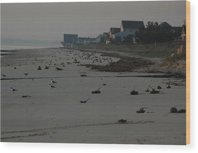 Crabs Wood Print featuring the photograph Horseshoe Crab Season by See Me Beautiful Photography