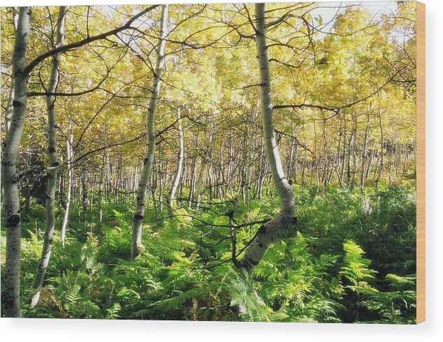 Ferns Wood Print featuring the photograph Leaves And Ferns by Caroline Clark