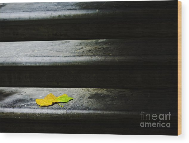 Maple Leaf Wood Print featuring the photograph Maple Leaf On Step by Sheila Smart Fine Art Photography