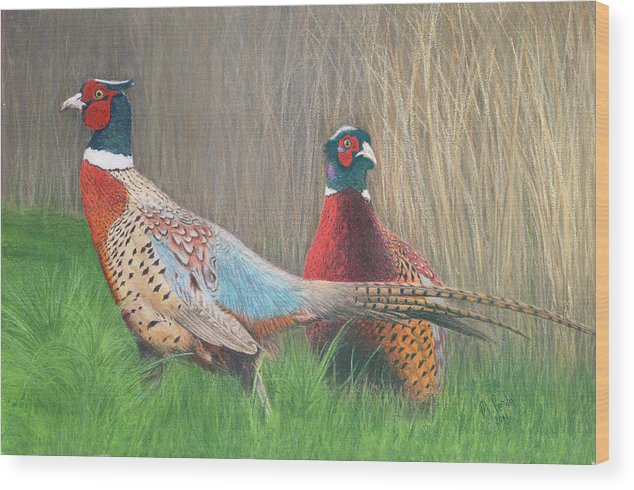 Pheasant Wood Print featuring the drawing Ring-necked Pheasants by Marlene Piccolin