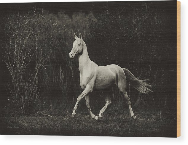 Horses Wood Print featuring the photograph Shaar-shael by Artur Baboev