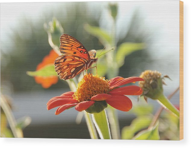 Butterfly Wood Print featuring the photograph Butterfly by Robert Johnston