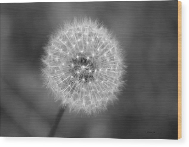 Dandelion Wood Print featuring the photograph Dandelion Seed by DD Edmison