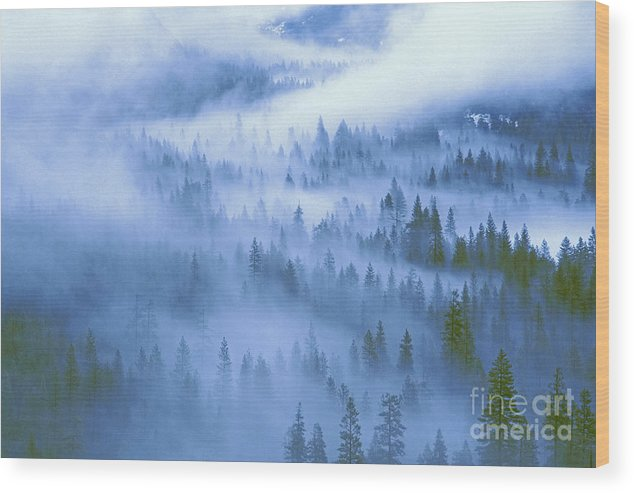 North America Wood Print featuring the photograph Fir Trees Shrouded In Fog In Yosemite Valley by Dave Welling