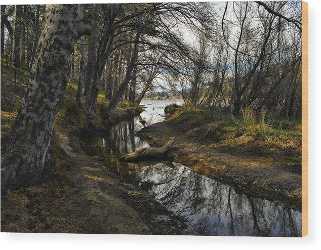 Creek Wood Print featuring the photograph Houston Creek by Randal Bruck