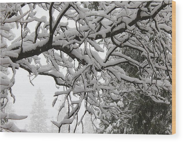 Snow Wood Print featuring the photograph Snow Covered Branches by Paul Shoaf