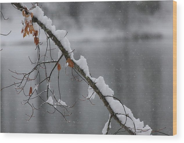 Snow Wood Print featuring the photograph Snowy Day by Paul Shoaf