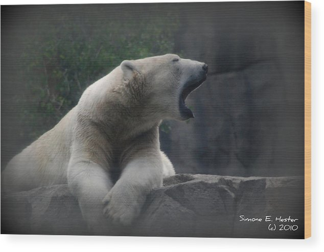 Polar Bear Wood Print featuring the photograph Too Tired by Simone Hester