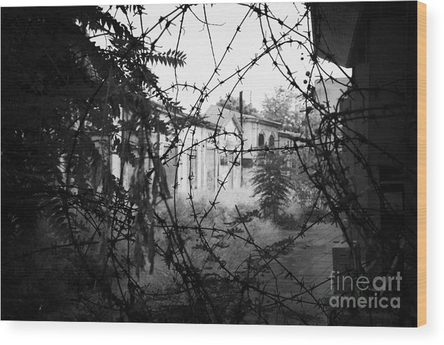 United Wood Print featuring the photograph barbed wire across no mans land and restricted area of the UN buffer zone in the green line by Joe Fox