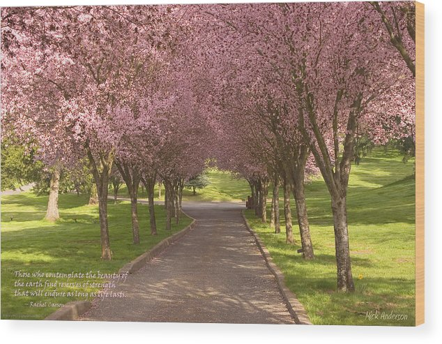 Blooms Wood Print featuring the photograph Blooms Along The Lane by Mick Anderson