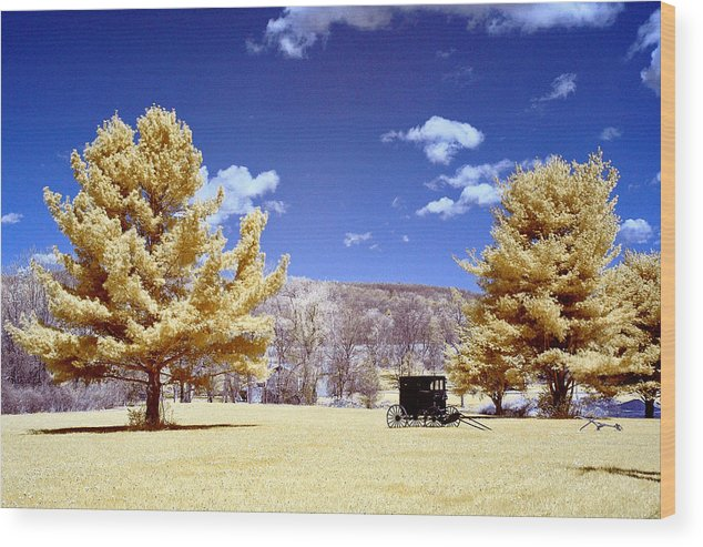 Trees Wood Print featuring the photograph Solitude by Stephen Pacello