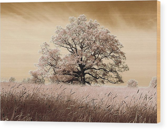 Trees Wood Print featuring the photograph Spring Breeze by Stephen Pacello
