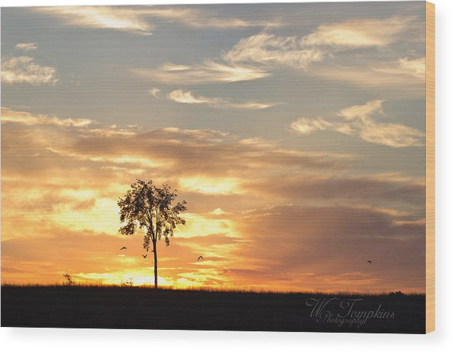 Sunrise Wood Print featuring the photograph Sunrise Tree by Wendy Tompkins
