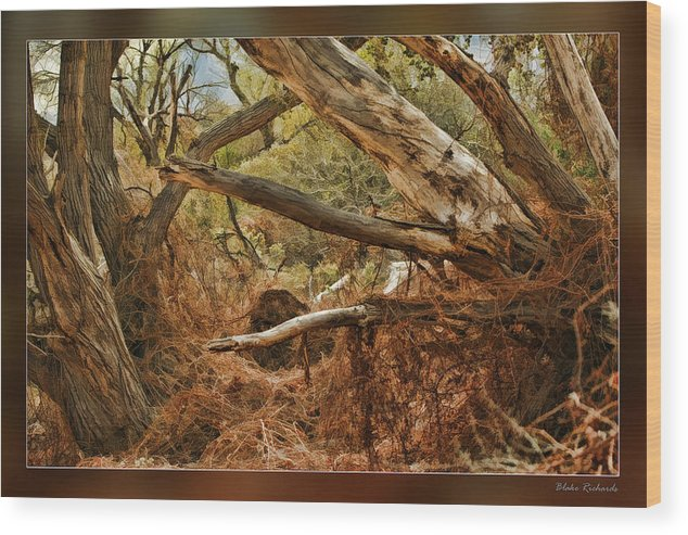 Fine Art Photographers Wood Print featuring the photograph Tree Woods by Blake Richards