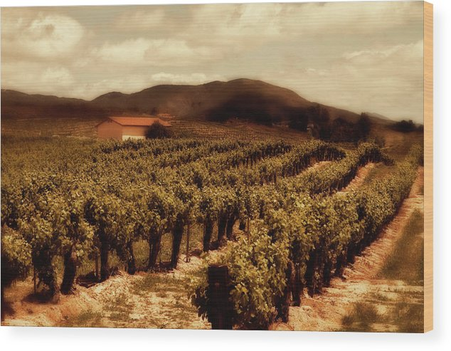 California Wood Print featuring the photograph Wine Country by Peter Tellone
