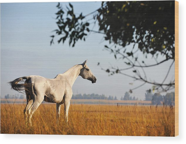Horses Wood Print featuring the photograph Alikhan by Artur Baboev