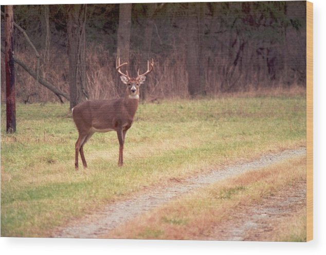 Deer Wood Print featuring the photograph 070506-17 by Mike Davis